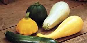 characteristics and varieties of squash