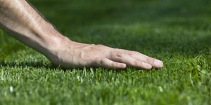 planning and beginning a new lawn