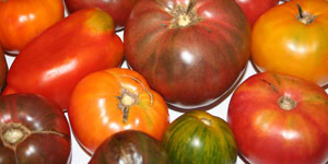 types of tomatoes