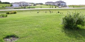 lawn mower landscape