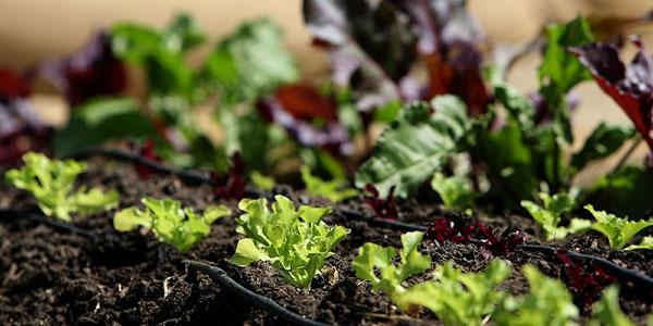 Organic Gardening | Organic Gardening Tips | GardenDad.